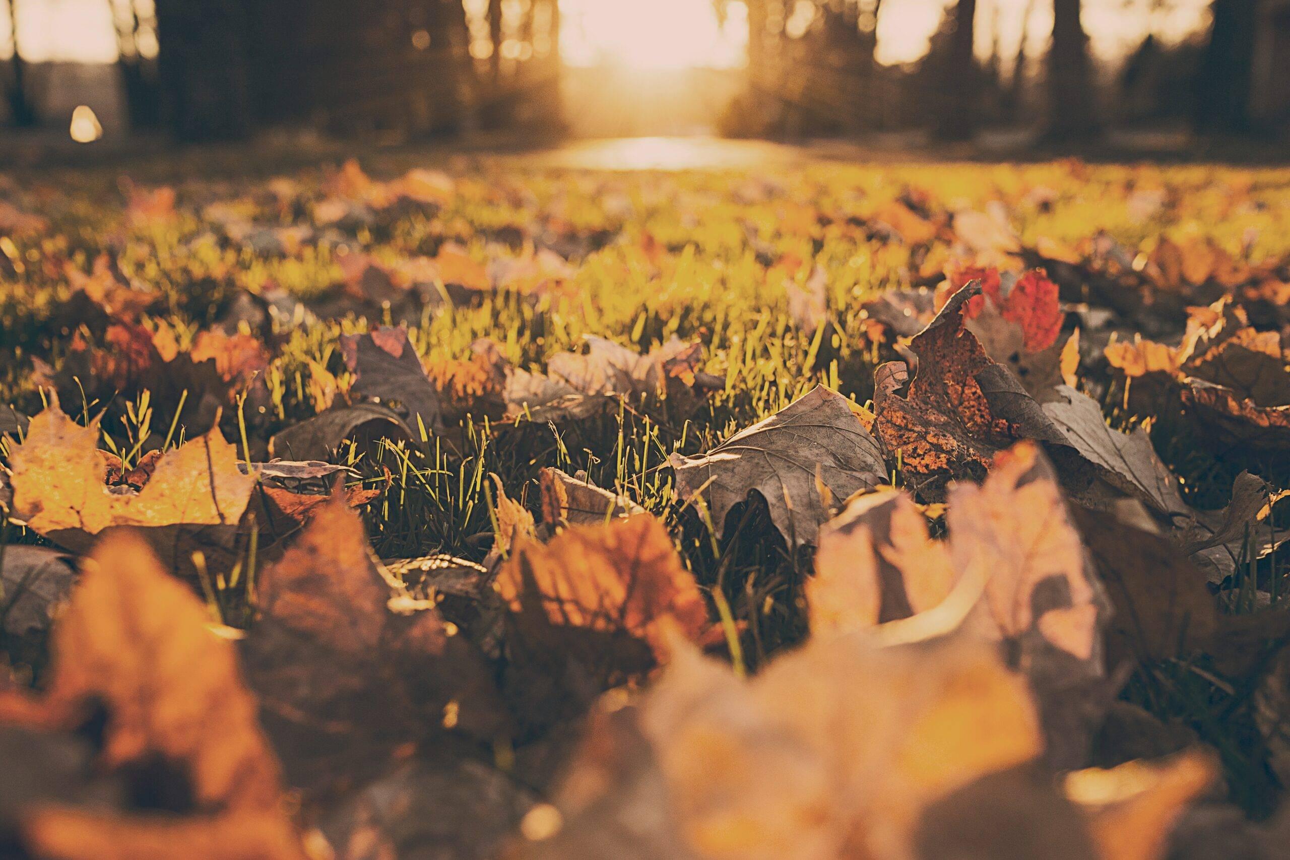 autumn-fall-foliage-380